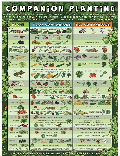 25 superb Vegetable Garden Design Tools thorplccom