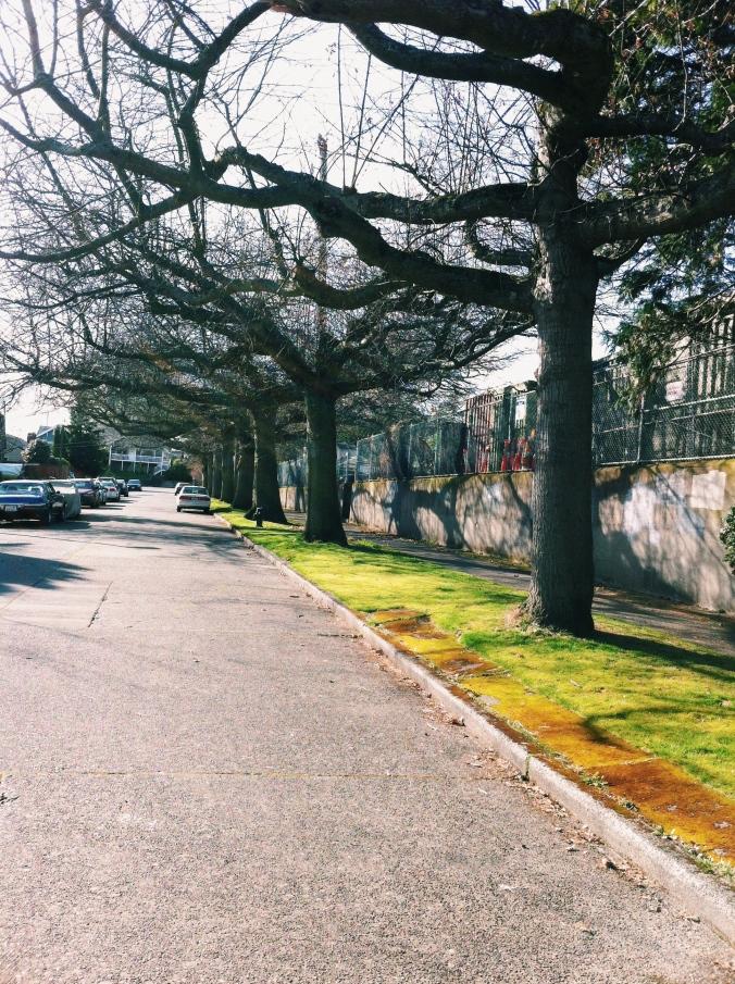 Treelined Streets